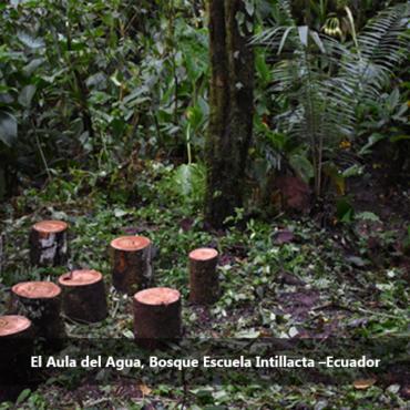 El Bosque Modelo Chocó Andino promueve la adopción de Bosques Escuela en la reunión anual de directorio de la Red Iberoamericana de Bosques Modelo – RIABM
