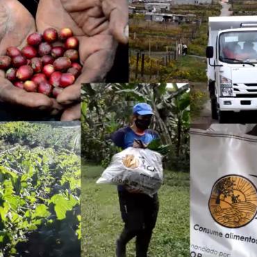 Avances en la construcción de sistemas de comercialización alternativa en la Mancomunidad del Chocó Andino