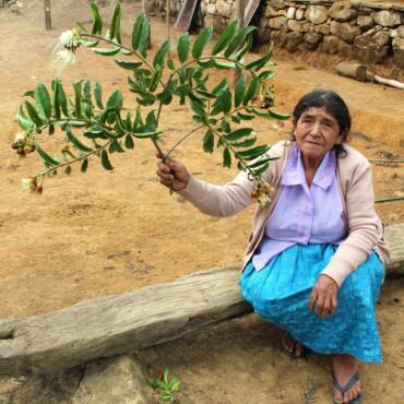 Con la reforestación de 744 hectáreas en la microcuenca de Pusmalca se tendrá más agua para la población y la agricultura en Piura