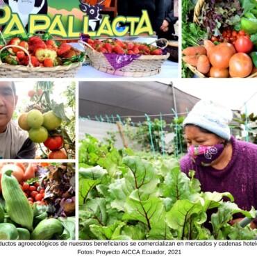 Productos agroecológicos de nuestros beneficiarios se comercializan en mercados y cadenas hoteleras